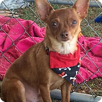 Adopt A Pet :: MIKE - Rancho Cucamonga, CA