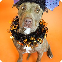 Adopt A Pet :: Zak - Phoenix, AZ