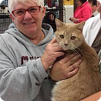 Adopt A Pet :: Charlie - Muskegon, MI
