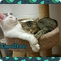 Adopt A Pet :: Hamilton - Atco, NJ