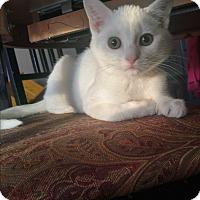 Adopt A Pet :: Dory - Baltimore, MD