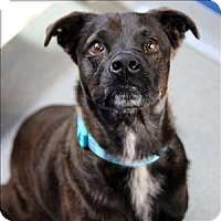 Adopt A Pet :: Jasmine - McKinney, TX
