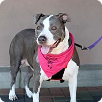 Adopt A Pet :: Jazzy - Courtesy Post - Beverly Hills, CA