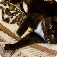 Adopt A Pet :: Macy - Mebane, NC