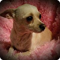Adopt A Pet :: Happy - Allentown, PA