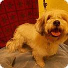 Adopt A Pet :: *LEE JAY