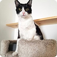 Adopt A Pet :: Selena - Los Angeles, CA