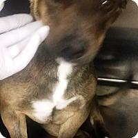 Adopt A Pet :: Floki - Rancho Cucamonga, CA