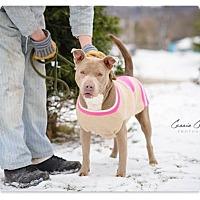 Adopt A Pet :: Arianna - Urgent! - Zanesville, OH
