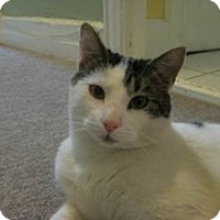 Adopt A Pet :: Giuseppe - Berkeley Hts, NJ