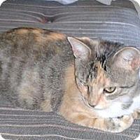 Adopt A Pet :: Mamma Kitty - Acme, PA