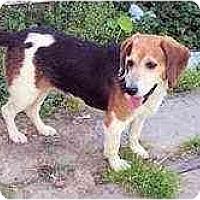 Adopt A Pet :: Chablis - Novi, MI