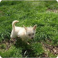 Adopt A Pet :: Frankie - Eden, NC