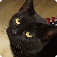 Adopt A Pet :: Lizzie - Sprakers, NY