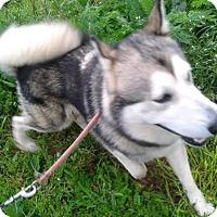 Adopt A Pet :: Olaf - Augusta County, VA