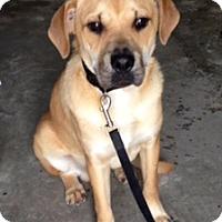 Adopt A Pet :: ANDY - Bedminster, NJ