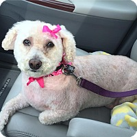 Adopt A Pet :: Lucy - Wilmington, DE