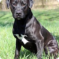 Adopt A Pet :: Clinton - Waldorf, MD