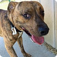 Adopt A Pet :: Chuckie C - Troy, MI