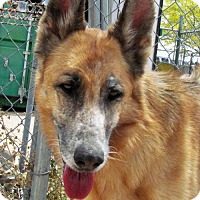 Adopt A Pet :: Roxie - San Tan Valley, AZ