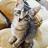 Adopt A Pet :: Bennie - Kennesaw, GA
