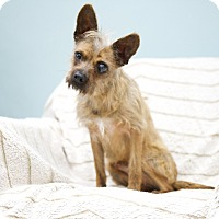 Adopt A Pet :: Sparky - Studio City, CA
