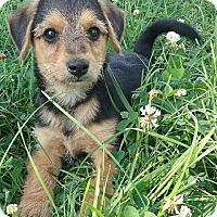 Adopt A Pet :: I'M ADPTD 7 Dwarfs