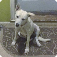 German Shepherd Dog Mix Dog for adoption in Montgomery, Alabama - Zara