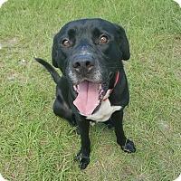 Adopt A Pet :: Tyler - Umatilla, FL