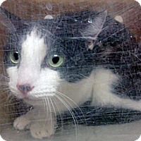 Adopt A Pet :: Bobby - Wildomar, CA
