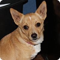 Adopt A Pet :: Sadee - Prosser, WA