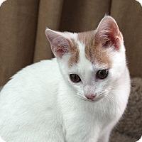 Adopt A Pet :: Dottie - Durham, NC