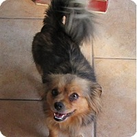 Adopt A Pet :: Bella Marie (Sweetie) - Cleveland, OH