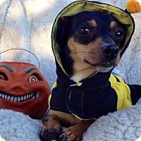 Adopt A Pet :: Walter - thibodaux, LA