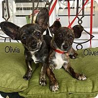 Adopt A Pet :: Oliver (BH) - Santa Ana, CA