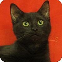 Adopt A Pet :: Spaz - Richland, MI