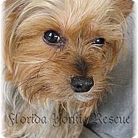 Adopt A Pet :: Rusty - Palm City, FL
