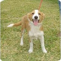 Adopt A Pet :: Tray - Orlando, FL