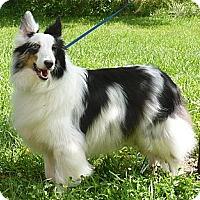 Adopt A Pet :: BluBell - Charlottesville, VA