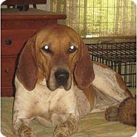 Adopt A Pet :: Bonnie - Bakersville, NC