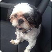 Adopt A Pet :: Tai Chi - Oceanside, CA