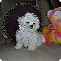 Adopt A Pet :: Fluff - San Diego, CA