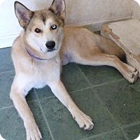 Adopt A Pet :: CARMEN - Paron, AR