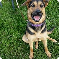 Adopt A Pet :: Violet - Burleson, TX