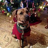 Adopt A Pet :: Tigger - Alpharetta, GA