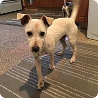 Adopt A Pet :: CHLOE - Boca Raton, FL