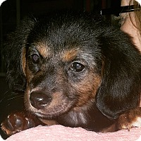 Adopt A Pet :: Mac - Homewood, AL