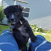 Adopt A Pet :: Jaylyn - Tomah, WI