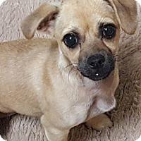 Adopt A Pet :: Mary Puppins - Alexandria, VA