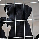 Adopt A Pet :: Frederic